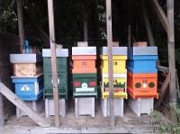 Honigbienen Invest. 67Kg mit eigener Destination Gutschein